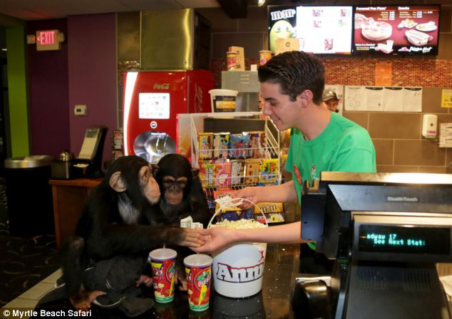 Chimp concessions
