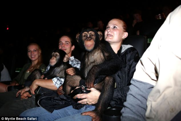 Chimp cinema