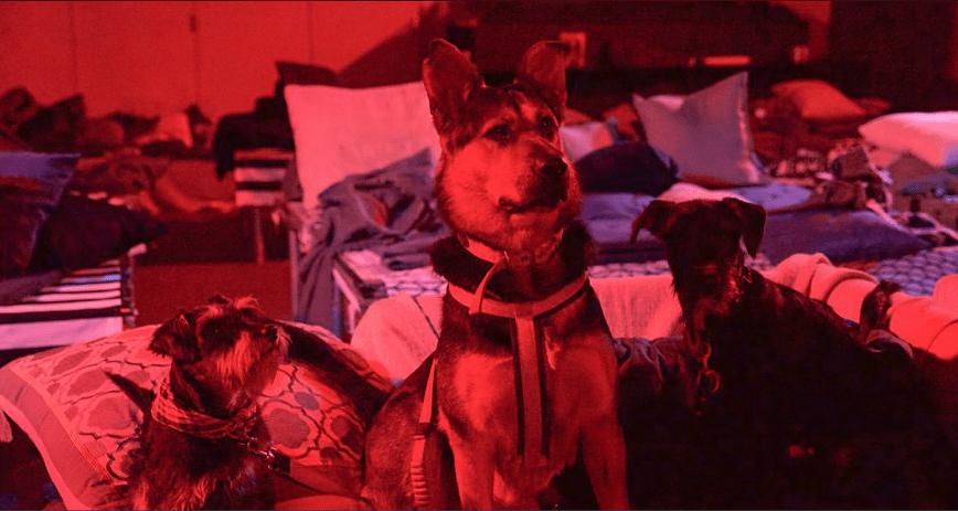 Dog cinema East London.