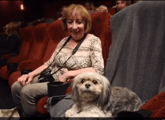 Dog in cinema