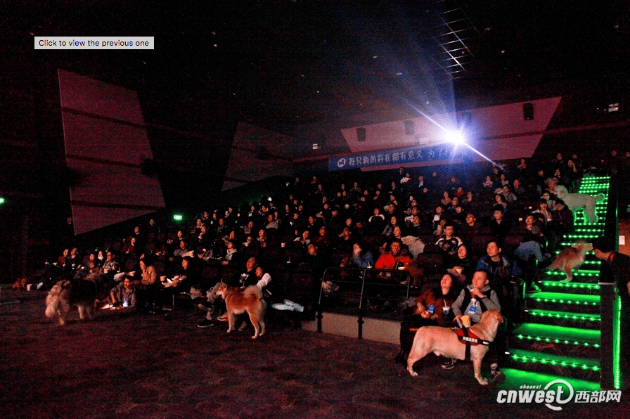 Dog cinema in Xi'an. (photo: China News)
